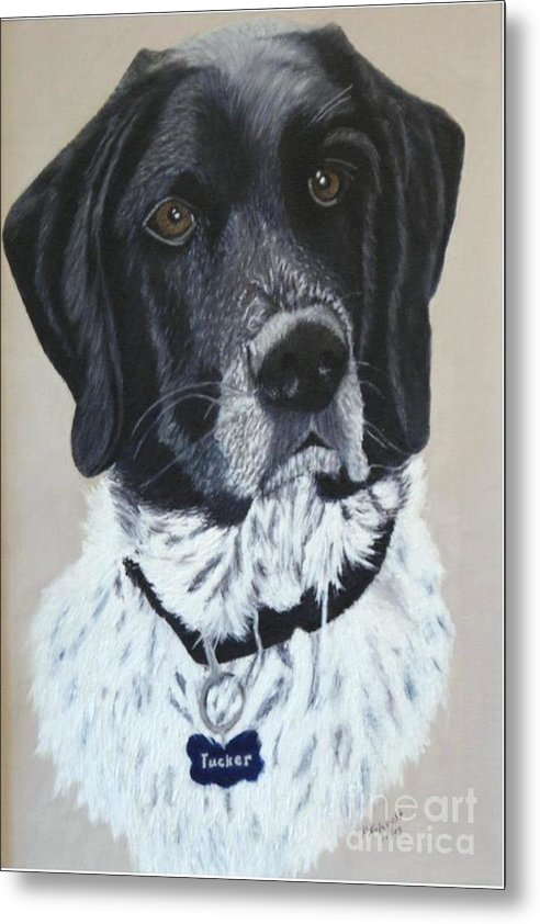 Dog Portrait Paintings Metal Print featuring the painting Tucker by Peggy Holcroft