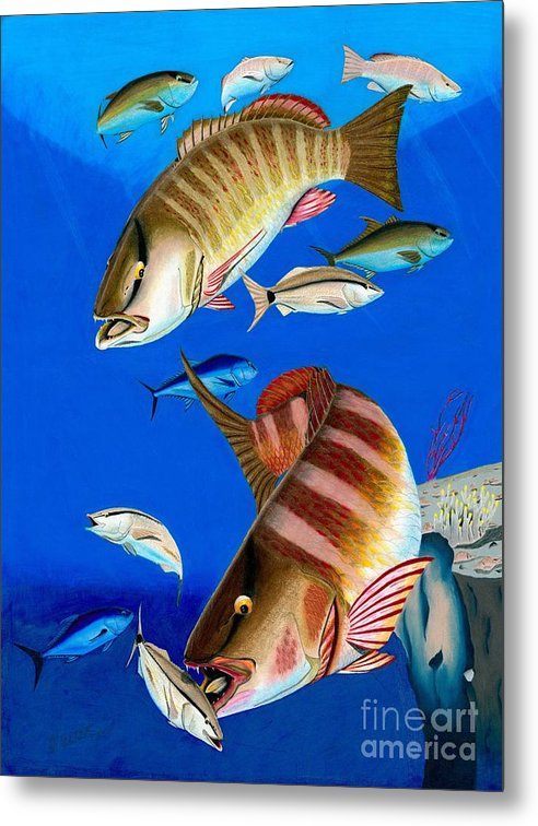 Mangrove Snapper Metal Print featuring the drawing Bandits by Jonathan Teeter