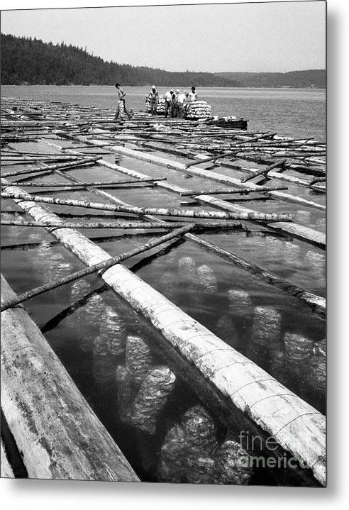 Labor Metal Print featuring the photograph Oystering Industry by Merle Junk