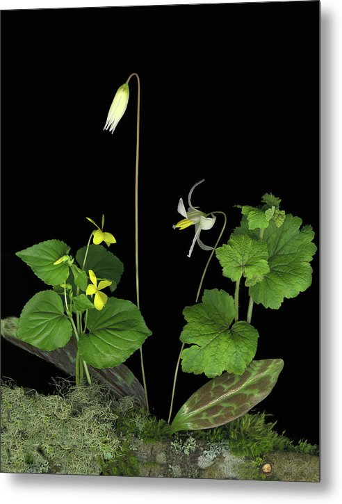 Fawn Lily Metal Print featuring the digital art Fawn Lily by Sandi F Hutchins