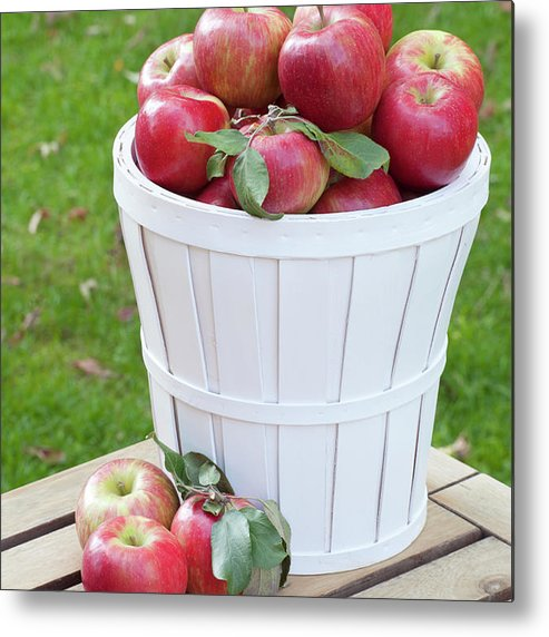Outdoors Metal Print featuring the photograph Basket Of Honey Crisp Apples by Wholden
