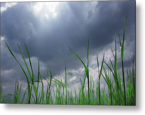 Thunderstorm Metal Print featuring the photograph Corn Plant With Thunderstorm Clouds by Silvia Otte