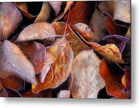 First Frost Metal Print featuring the photograph First Frost by Bill Morgenstern