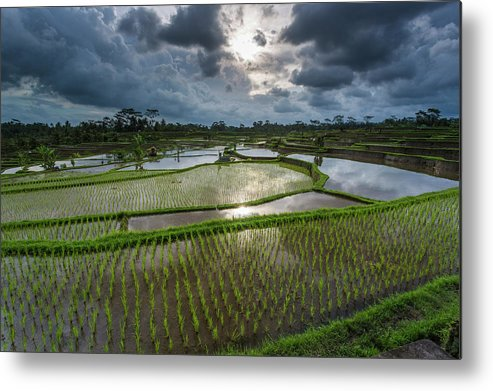 Tranquility Metal Print featuring the photograph Rice Terraces In Central Bali Indonesia by Gavriel Jecan
