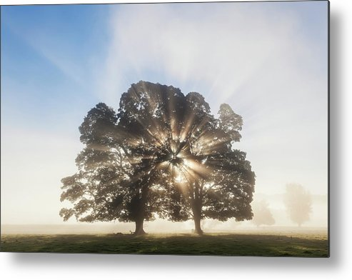 Tranquility Metal Print featuring the photograph Tree At Sunrise, Usk Valley, South by Peter Adams