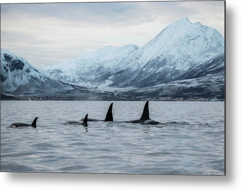 Snow Metal Print featuring the photograph 2 Big 2 Small by By Wildestanimal