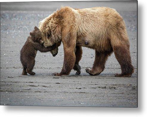 Alaska Metal Print featuring the photograph A Little Bear Hug by Renee Doyle