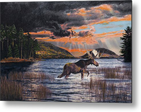 Moose Metal Print featuring the drawing Acadia Feast by Brent Ander