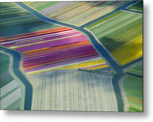 Curve Metal Print featuring the photograph Aerial View Of Flower Fields In Spring by Frans Sellies