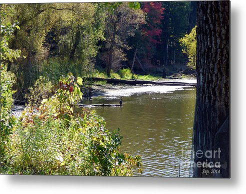 Nature Metal Print featuring the photograph Along The Waters Edge by Rennae Christman
