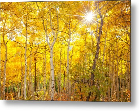Aspens Metal Print featuring the photograph Aspen Morning by Darren White
