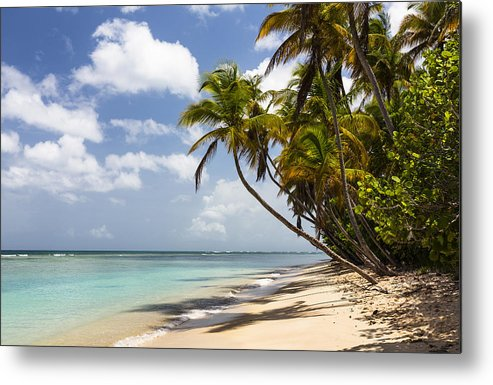 Konrad Wothe Metal Print featuring the photograph Beach Pigeon Point Tobago West Indies by Konrad Wothe