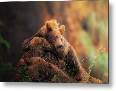 Bear Metal Print featuring the photograph Bear Portrait by Sergio Saavedra Ruiz