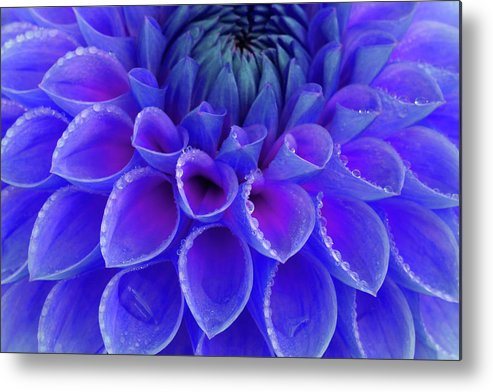 Haslemere Metal Print featuring the photograph Centre Of Blue And Purple Dahlia Flower by Rosemary Calvert