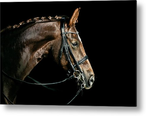 Horse Metal Print featuring the photograph Chestnut Dressage Horse Groomed For A by Anja Hild
