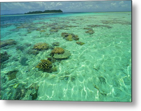 Water's Edge Metal Print featuring the photograph Coral Paradise by Tammy616