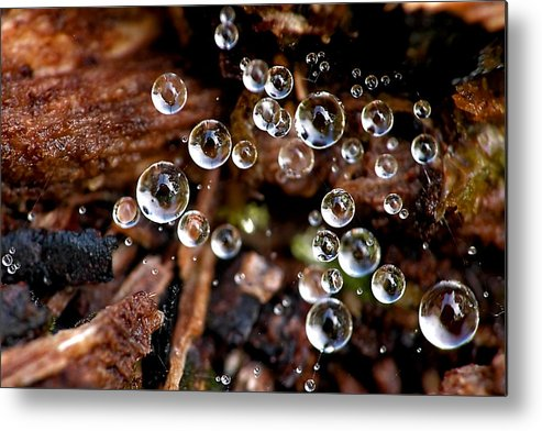 Dew Metal Print featuring the photograph Dew 1799 by Damon Clarke