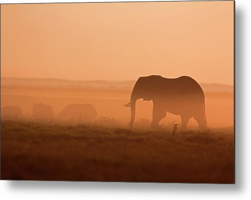Scenics Metal Print featuring the photograph Elephants At Dawn by Wldavies