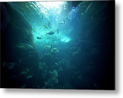 Underwater Metal Print featuring the photograph Fishes by By Tddch