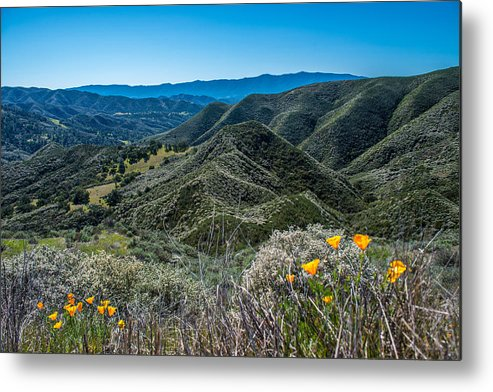 Mountains Metal Print featuring the photograph Flowers and Mountains by Paul Johnson