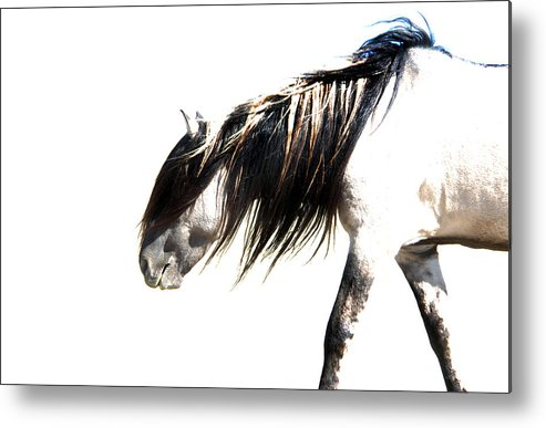 Sundowner Metal Print featuring the photograph Ghost Horse by Lourie Zipf