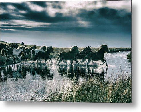 Horse Metal Print featuring the photograph Group Of Horses Crossing A River by Arctic-images