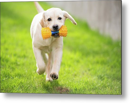 Pets Metal Print featuring the photograph Happy Hour by Stefan Cioata