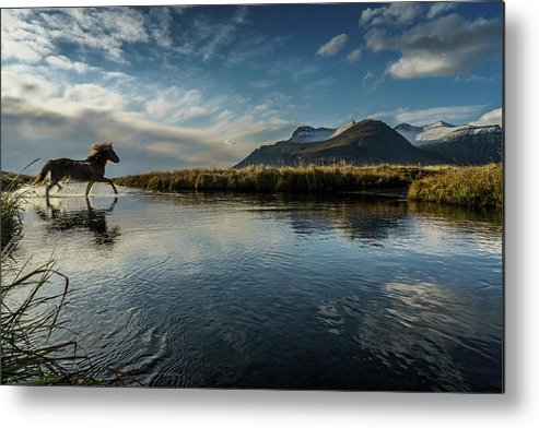 Majestic Metal Print featuring the photograph Horse Crossing A River, Iceland by Arctic-images
