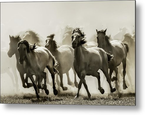 Horses Metal Print featuring the photograph Horse by Heidi Bartsch