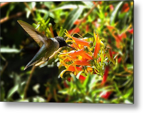 Hummingbird Metal Print featuring the photograph In Flight Dining by Richard Henne