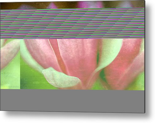 Japanese Metal Print featuring the photograph Japanese Magnolias by Keith Gondron