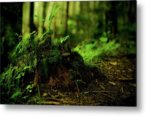 Hokkaido Metal Print featuring the photograph Leaf Bud by Plasticboystudio
