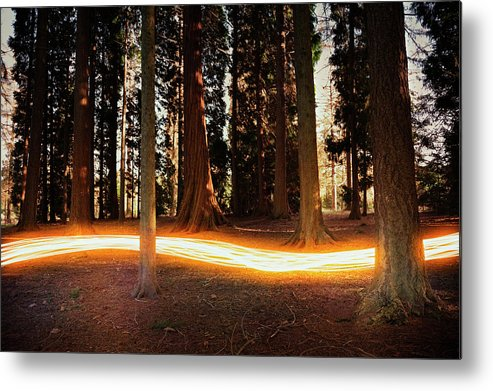 Kent Metal Print featuring the photograph Light Trail Passing Around Trees by Robert Decelis Ltd