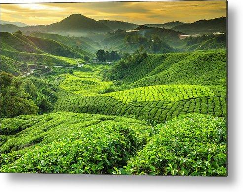 Cameron Highlands Metal Print featuring the photograph Malaysia, Pahang, Cameron Highlands by Cescassawin