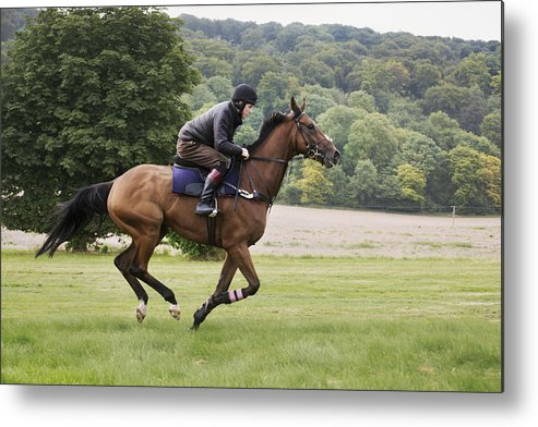 Horse Metal Print featuring the photograph Man on a bay horse galloping across grass. by Mint Images