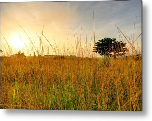Scenics Metal Print featuring the photograph Morning Sun Shining Through The Tree by Primeimages