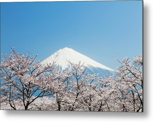 Scenics Metal Print featuring the photograph Mount Fuji & Cherry Blossom by Ooyoo