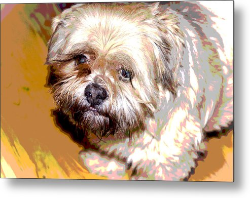 Digital Photo Metal Print featuring the photograph My Friend Lhasa Apso by Sergey Bezhinets