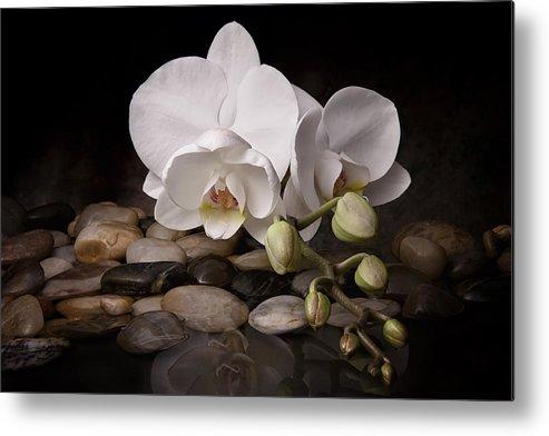 Arrangement Metal Print featuring the photograph Orchid - Sensuous Virtue by Tom Mc Nemar