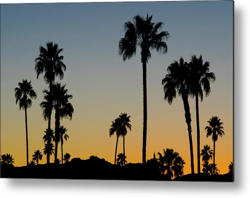 Scenics Metal Print featuring the photograph Palm Trees At Sunset by Chapin31
