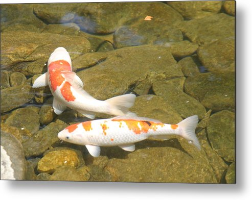 Fish Metal Print featuring the photograph Partners by Dervent Wiltshire