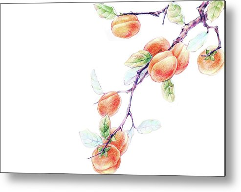 White Background Metal Print featuring the digital art Persimmon Tree by Bji / Blue Jean Images