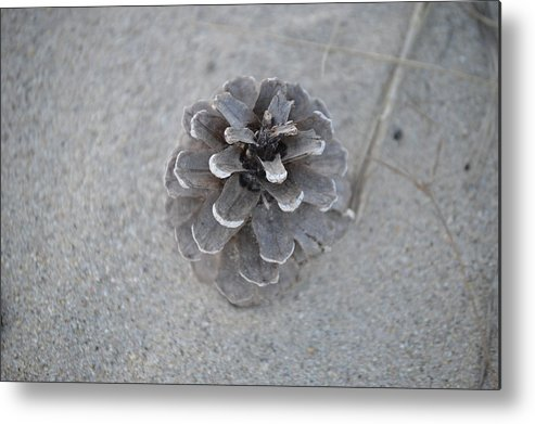 Pine Cone Metal Print featuring the photograph Pine Cone by Jessica Cruz