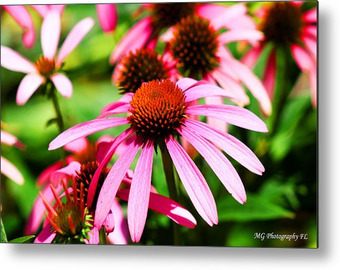 Pink Metal Print featuring the photograph Pink Beauty by Marty Gayler