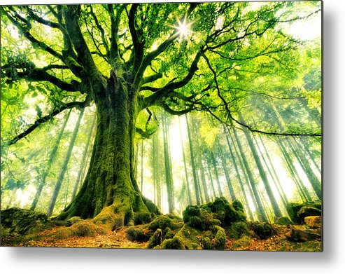 Creative Metal Print featuring the photograph Ponthus' Beech by Christophe Kiciak
