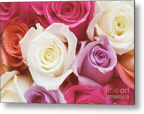 Romantic Flower Photo Metal Print featuring the photograph Romantic Rose Garden by Kim Fearheiley