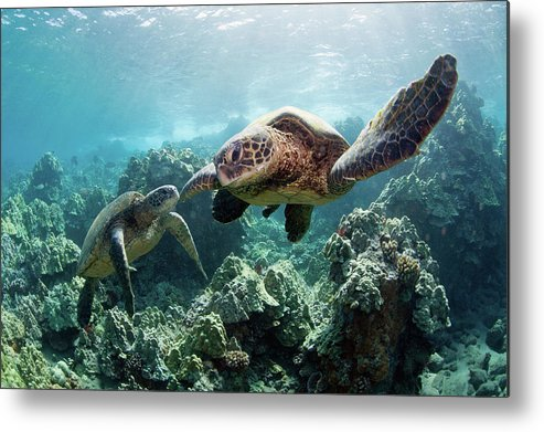 Underwater Metal Print featuring the photograph Sea Turtles by M Swiet Productions