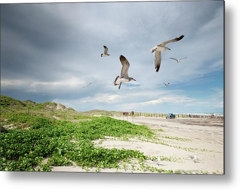 Scenics Metal Print featuring the photograph Seagulls In Flight At North Padre by Olga Melhiser Photography