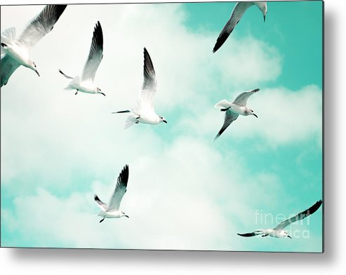 Seagull Photography Metal Print featuring the photograph Seagulls Soaring by Kim Fearheiley