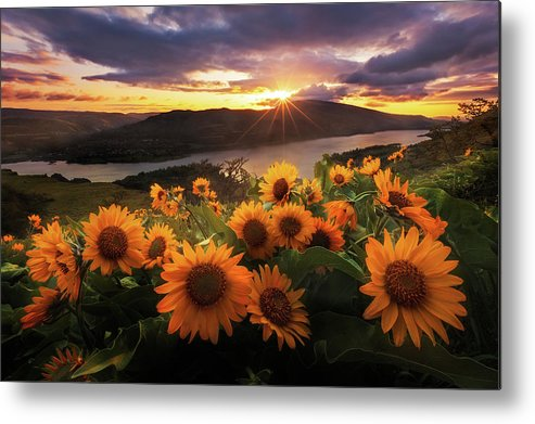 Outdoors Metal Print featuring the photograph Sunflower Field by Jeremy Cram Photography